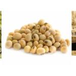 Jual Mesin Pulp Grinder Pembubur Kacang-Kacangan di Medan